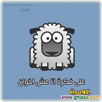 نكت مصرية على الاخوان 2019 ، صور نكت مضحكة على صفوت حجازى و الاخوان2019 ، نكتة الاخوان2019 ghlasa1377449791159.jpg