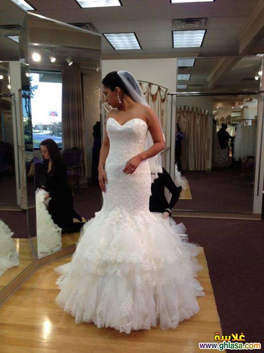 فساتين زفاف 2018 ، Wedding dresses 2018 ، صور فستان زفاف جديد 2018 ghlasa1377491261826.jpg