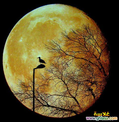 صور جديده للقمر وجماله 2019 ghlasa1380670310788.jpg