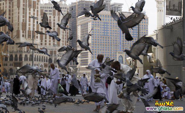 صور من موسم الحج لحجاج بيت الله 1441 ، صور الحج 2020 ghlasa1381782915826.jpg