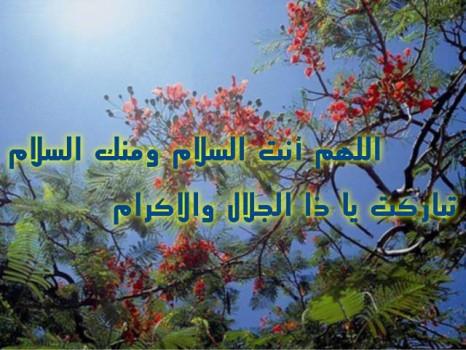 صور حكم اسلامية للنشر يوم الجمعة ، صور اسلامية فيس بوك للنشر 2020 ghlasa1383415237954.jpg