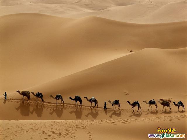 صور اسلامية 1435 ، صور دينية 1435 ، صور تصميمات العام 1435 ghlasa1383538222931.jpg