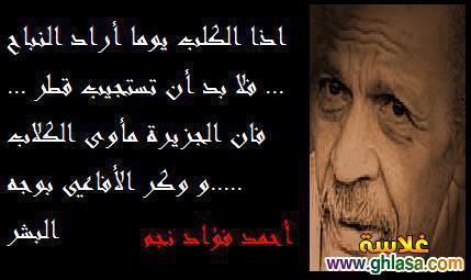 صور اشعار وكلمات الشاعر الراحل احمد فؤاد نجم للرئيس المخلوع محمد مرسى و حسنى مبارك ghlasa138605671122.jpg
