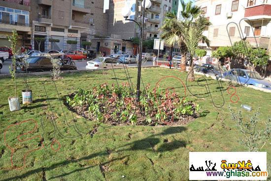صور شباب من المنصوره يزرعه شجر لتجميل المنصوره ghlasa1386491745446.jpg