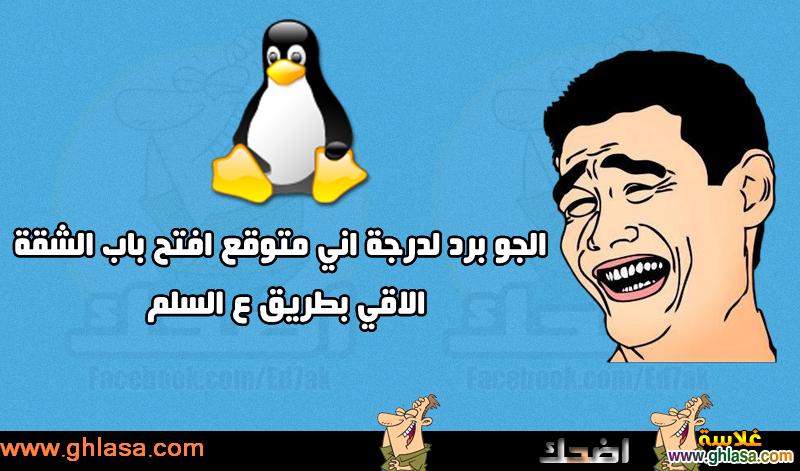 نكت مصرية على فصل الشتاء  ، نكت المصريين على درجة الحرارة فى مصر  ghlasa1386857903599.png