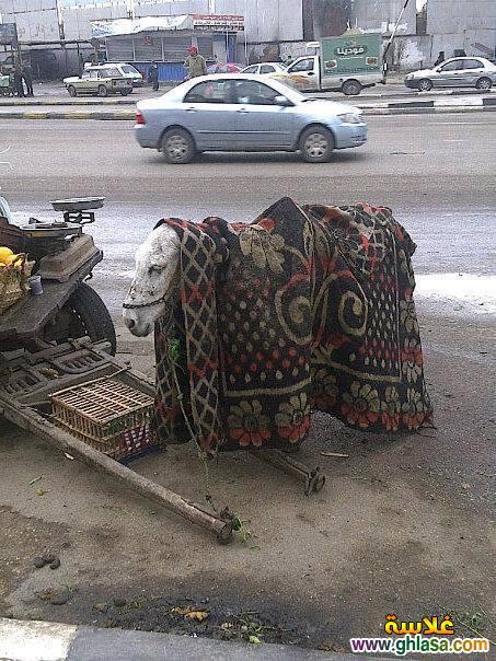 صور نكت مضحكة على الامطار والبرد فى مصر 2019 ، صور نكت شتوية على الجو التلج فى بلدنا 2019 ghlasa138685934255.jpg