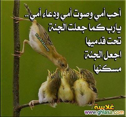 صور اسلامية شهر رمضان2021-1435 ، صور دعاء فيس بوك شهر رمضان 2021-1435 ghlasa1388680187824.jpg